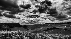 Afternoon (ZeGaby) Tags: avenayvaldor blackandwhite champagne lx15 landscape lumix mutigny paysages vines vineyards grandest france fr