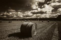 eingerollt... (st.weber71) Tags: nikon nrw niederrhein natur feld felder d800 deutschland germany outdoor ernte heu wolken landwirtschaft