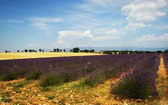 La Provenza ... (Augusta Onida) Tags: routedelavande strada della lavanda francia france lavender panorama landscape campagna country campo field nuvola cloud nubi valensole