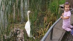 Peaceful coexistence (langkawi) Tags: engelbecken berlin swans turtle wasserschildkröte schwäne kind child girl mädchen pond teich explore urban nature