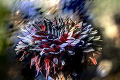 Dalia (seguicollar) Tags: imagencreativa photomanipulación art arte artecreativo artedigital virginiaseguí flor flower azul dalia dalhia vegetal vegetación macro macrofotografía