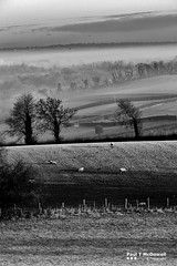 misty morning (Paul T McDowell Photography) Tags: 2017 blackandwhitephotography bright camera canonef70200f28lisusm canoneos5dmarkii cloudy cookstown countytyrone digital fineartphotography frost image landscape landscapephotographer lens northernireland orientation outdoor paultmcdowellphotography photography places season sunrise time tullyhoguefort unitedkingdom vertical weather winter year