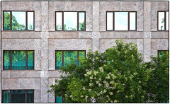 Mirror images (ahmBerlin) Tags: baum tree reflection spiegelung haus bauwerk building