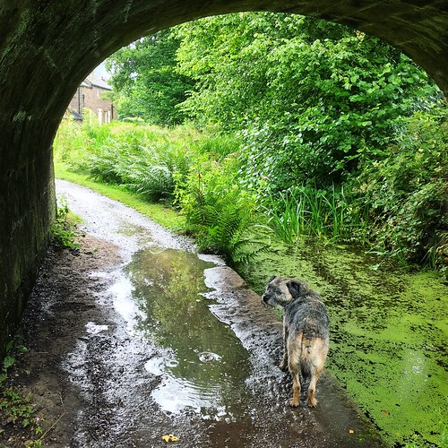 Waiting out the rain storm with Ern #cromfordcanal
