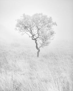 SILENCE 1 (infrared tree project)