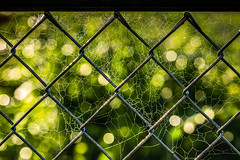 finding beauty in the chaos (auntneecey) Tags: web fence bokeh lightiseverything findingbeautyinthechaos 365the2017edition 3652017 day213365 1aug17
