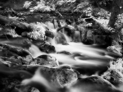 Leaf and Stream (Richard Denney) Tags: mchughcreek chugachstatepark alaska infrared longexposure creek water flowing nature stream river outdoors blackandwhite