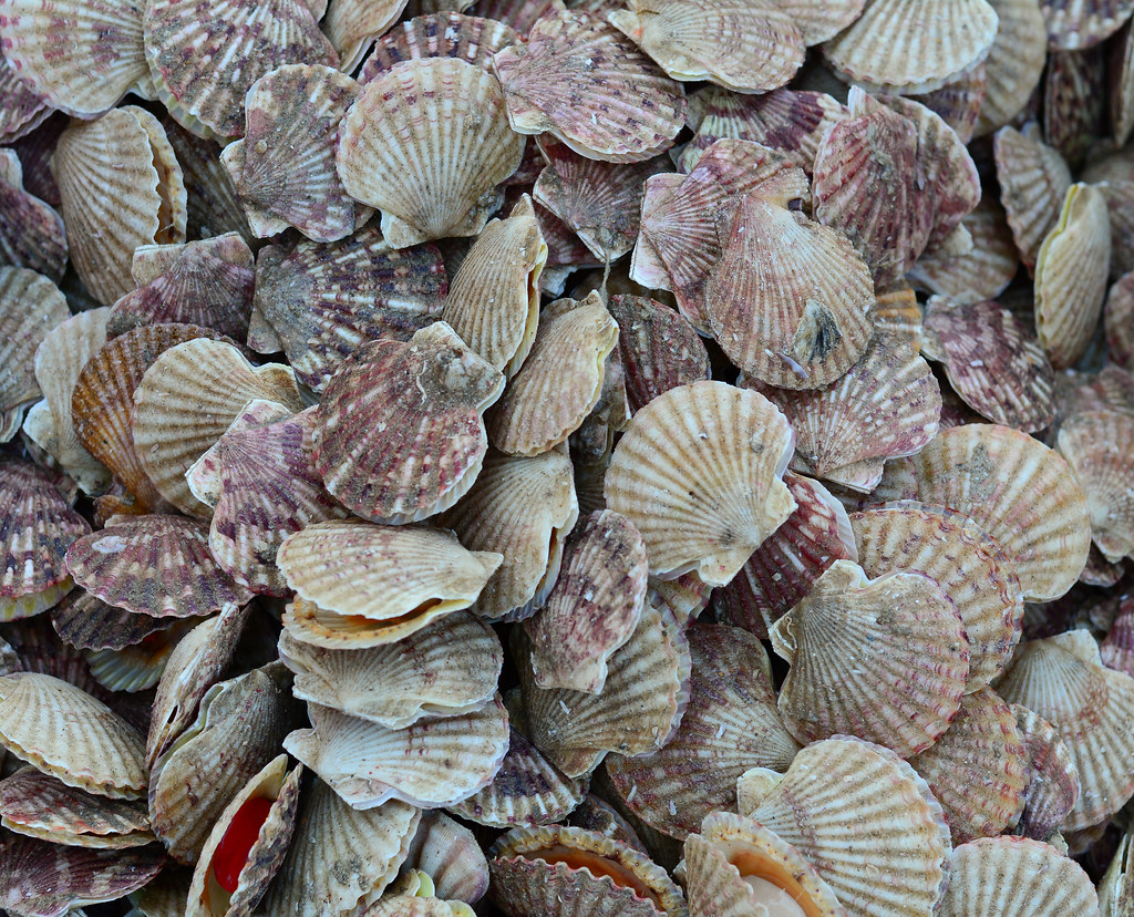 R Clams Healthy The World's Best Photo...