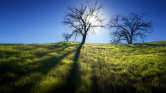 Contrasts (Israel DeAlba) Tags: trees light sun grass cesped luz sol arboles contraste israeldealba