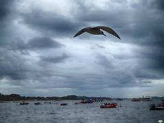 Vigilante del muelle (juantiagues) Tags: gaviota muelle illa isla arousa nubes juantiagues juanmejuto