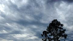 Tree (Studio d'Xavier) Tags: werehere onewordtitles tree sky negativespace minimalism skies clouds
