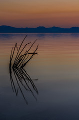 Reeds Sticking Out Of Water, Mono Lake_-2 (Basak Prince Photography) Tags: 395 black blue calm colors dawn dusk easternsierra monolake orange red reed reeds serenity silhouette southtufas summer sunrise yellow