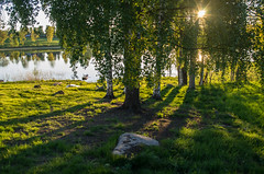 evening by the lake (ΞSSΞ®®Ξ) Tags: ξssξ®®ξ pentax k5 water lake 2017 hälsingland sweden sverige countryside tree outdoor evening landscape reflection sky sun smcpentaxda1855mmf3556alwr light backlight shadows birch