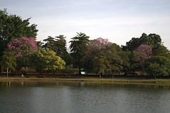 Jataí, Goiás, Brasil (Proflázaro) Tags: brasil jataí goiás cidade parqueecológicodiacuy cerrado bosque árvore parque flores lago água