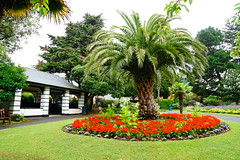 Pineapple Park (JamieHaugh) Tags: minehead somerset england uk outdoors park color plants pineapple trees hut shelter day sony a6000 nature green flowers blenheim gardens