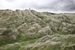 Windswept Irish Seagrass (rivadock4) Tags: wild atlantic way dingle ireland desaturated grasses seagrass texture wildatlanticway