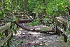 Boardwalk Breakdown (+David+) Tags: boardwalk trailthroughthewoods broken stjohnsmeadows