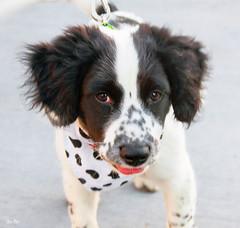 take me home 2... (Stu Bo) Tags: dog puppy cute adoption love animal