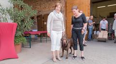 Labrador Emy (Günter Hentschel) Tags: labrador labbi lab labby labs hund dog nikon nikond5500 d5500 deutschland germany germania alemania allemagne europa outdoor hentschel flickr