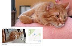 Yup, That's the Cat (merripat) Tags: cat craigslist lostcat yup