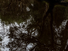 Altered Reality (Steve Paxton WA) Tags: trees branches grass sky dull day spooky