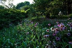 Flores al calor del último sol. (Cerratín (Off for a week)) Tags: distagon282zf paisaje china chinesegarden flores wuxi jiangzu zeiss distagon 28mm nikon d750 flowers fiori