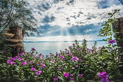 Landscape of Quan Lan (trieu_van_194) Tags: landscape landscapes landscapephotographer quanlan quangninh flower sun sunset sunray ray beach nature sea vietnamlandscape vietnamphoto vietnamtravel trip mytrip mytravel travel travelphoto trungducphoto travelphotograper beacutyful sellphoto sell nikon