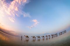 Dreaming way (maricontis) Tags: lake karum danakil ethiopia desert salt travel voyage viaggio caravan carovana camels sky human