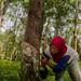 Agroforestry in Lubuk Beringin village