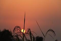 Sunset (abhishekprasad985) Tags: sunset sunrise nature colourful
