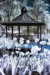 Adventures with NIK (dK.i photography) Tags: infrared falsecolor nik photoshop slidersunday spring tulip gazebo outdoors brooksidegardens maryland gardens nature park flower