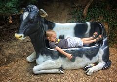 Coen having a cow (Pejasar) Tags: oklahoma zoo tulsa bench cow boy grandson