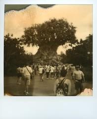 Disney 2017 (john eyes the world) Tags: impossible disneyworld polaroidonestep treeoflife