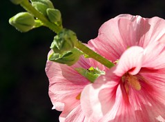 SAM_00751 (a.podkowińska) Tags: kwiat fleur flower nature natura macro makro