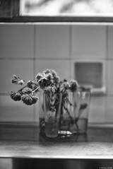 La vague d'Alvar et le Carré de Louis (Mathieu HENON) Tags: leica m240 noctilux 50mm monochrome blackwhite noirblanc france yvelines bazochessurguyonne louis carré alvar aalto acrchitecture vase