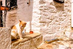 Cat (Kevin R Thornton) Tags: d90 nikon travel street mediterranean greece animal cat lefkes paros egeo gr