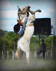 Klinsmann Moreira (Eduardo Amorim) Tags: gaúcho gaúchos gaucho gauchos cavalos caballos horses chevaux cavalli pferde caballo horse cheval cavallo pferd crioulo criollo crioulos criollos cavalocrioulo cavaloscrioulos caballocriollo caballoscriollos pampa campanha fronteira bagé riograndedosul brésil brasil sudamérica südamerika suramérica américadosul southamerica amériquedusud americameridionale américadelsur americadelsud cavalo 馬 حصان 马 лошадь ঘোড়া 말 סוס ม้า häst hest hevonen άλογο brazil eduardoamorim gineteada jineteada