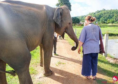 BMP-Elephant-Farm-Chiang-Mai-2