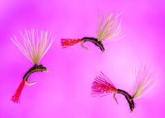 Adult Midge Emergers on #20 Hooks (KellarW) Tags: trio trey fishingfly flyfishing macromonday jumping three macromondays fishingflies fishinglures 3 macro pink onpink fly diving swimming fishinglure fishing