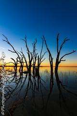 IMG_5430 (biglaptogs) Tags: barmera lakebonney riverland sa states sunsetsunrise