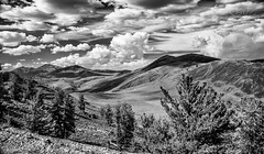 Adjusted-  2-9569-111 bw (stacikratz) Tags: bristlecone ancientbristleconenationalforest trees rollinghills gorgeous