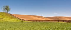 One Tree Hill (llabe) Tags: farmland hills rolling fields tree fence palouse easternwashington nikon d750