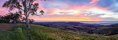 Hancocks lookout (Dusty Dog Imaging) Tags: sunset australia southaustralia flindersranges tree panorama panoramic