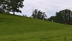Asheville (heytampa) Tags: biltmoreestate biltmore horses field asheville