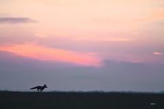 Instant furtif.... (aracobis) Tags: sigma100300 canon7d nature renard sauvage matin juillet2017 lorraine aube