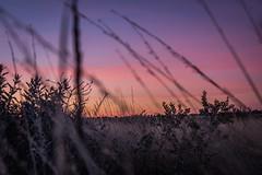 Uluru - Sunset-14