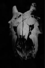 Masque (LeoF95) Tags: rue streetphotography mort muerte death face mascara masque gris grey street streetpoetry blackandwhite noiretblanc blancoynegro