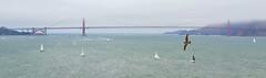 Gated (LTigers) Tags: sanfrancisco goldengate bridge alcatraz sailing fog d3100