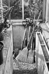 Greenhouse Brooms (AroundMyTown) Tags: brooms greenhouse gardening monochrome blackandwhite film acros100