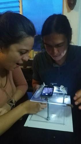 Investigaciones con Miniscopio